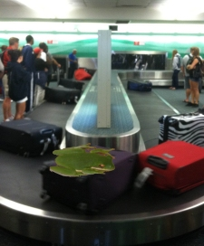 Fred's Luggage