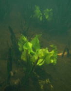 Underwater Harvest?