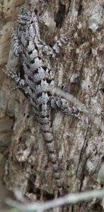 Blending lizard