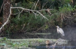 Heron perch