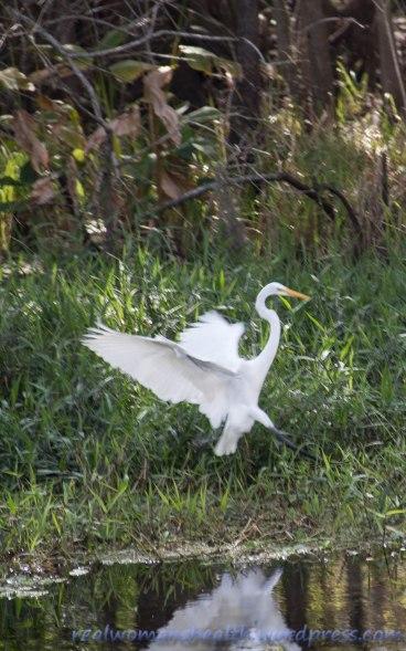 Egret Landing Zone