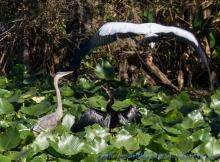 Three Bird Meeting