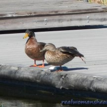 Duck Picnic