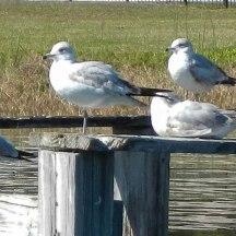 Gangs of Docks