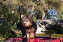 Puppy SUPer