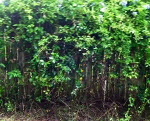 Upside down bushes