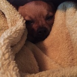 Cold puppy