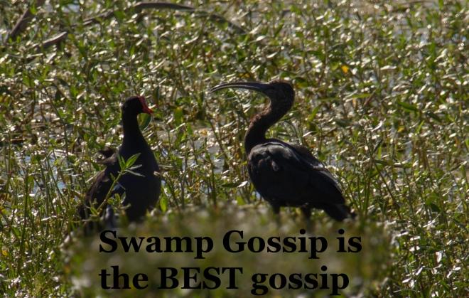 SwampGossip